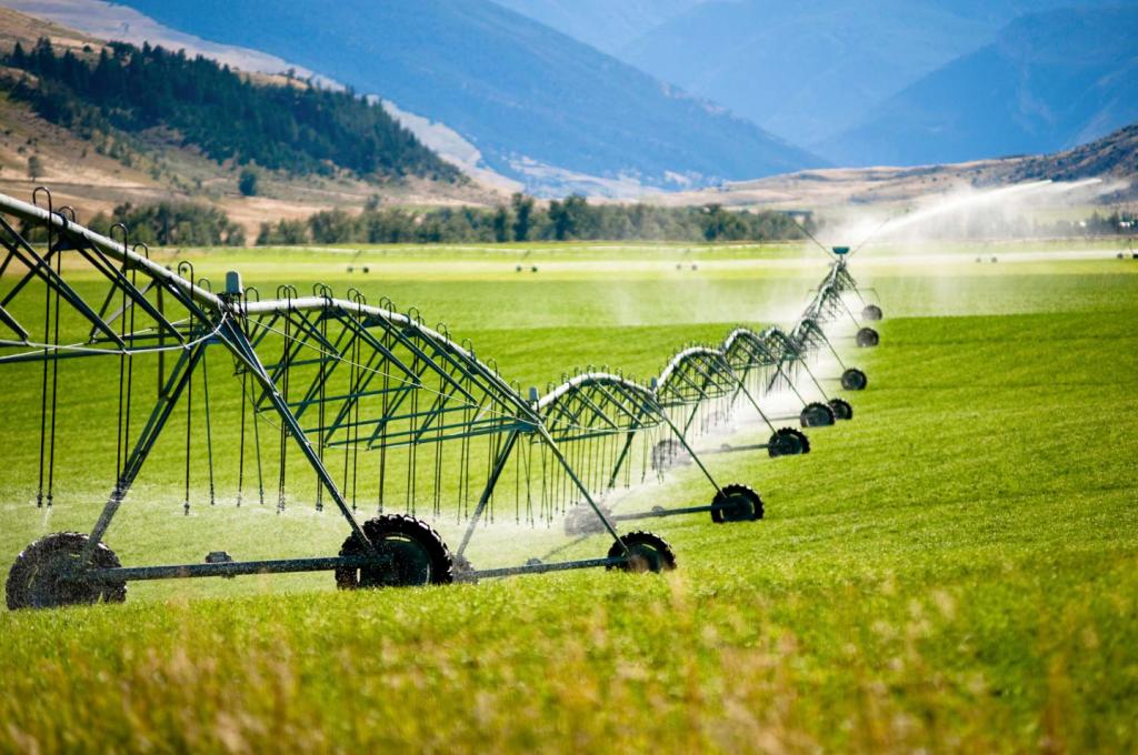 Sprinkler vs drip System